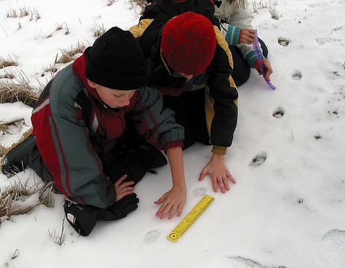 Measuring tracks in the snow